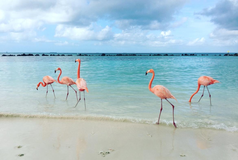 Renaissance Aruba Resort and Casino Flamingos